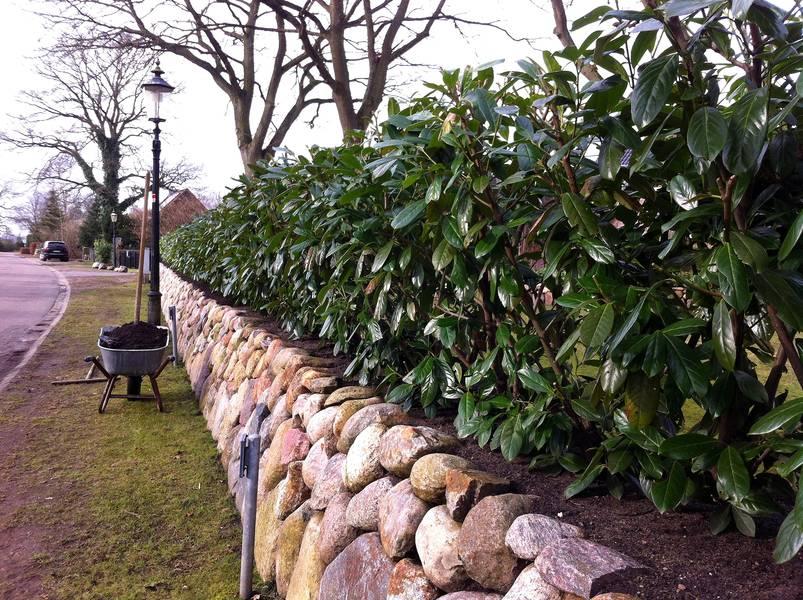 Friesenwall Bepflanzen friesenwall pflege e m gartenwelten