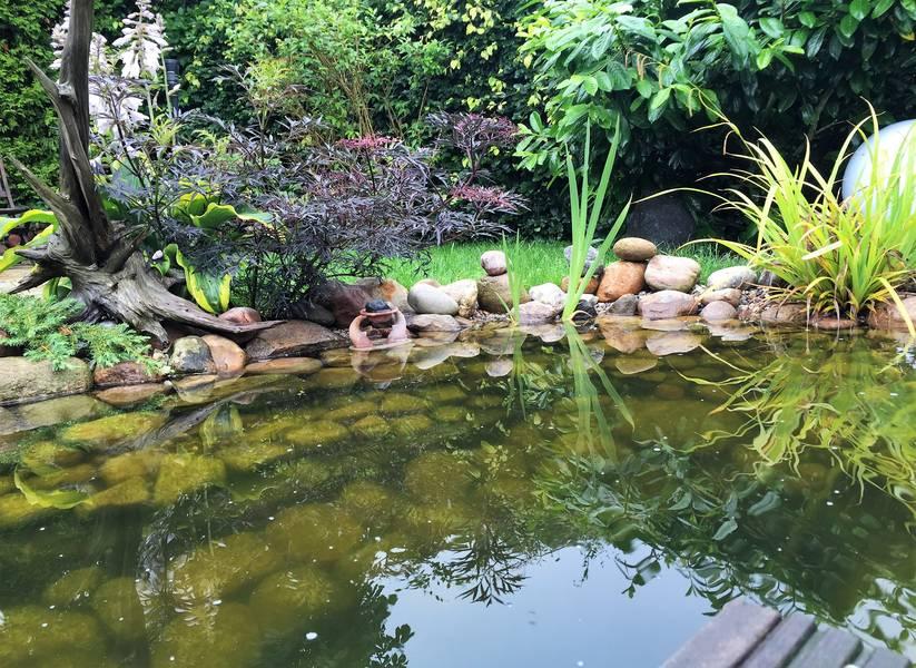 Gartenteiche e m gartenwelten for Was brauchen fische im teich